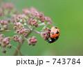 てんとう虫 743784