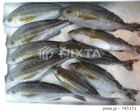 イサキの幼魚(ウリンボウ) 765171