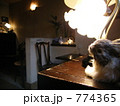 ランプとウサギ 774365