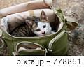 仔猫と鞄 778861
