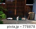 玄関番猫たち 778878