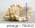 貝殻 781612