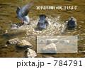 水浴び 784791
