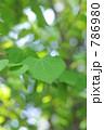 新緑 786980