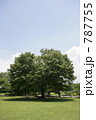 公園の木 787755