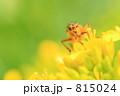 アブ ミズナ 水菜の写真 815024