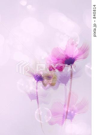 ロマンティック・コスモス 840814