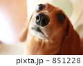 キキちゃん 851228