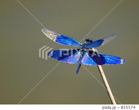 青い羽のトンボ 855574