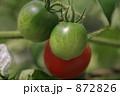トマト 872826