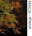 秋の色 873044