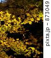 秋の色 873049