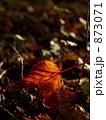 秋の色 873071