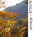 秋の色 873078