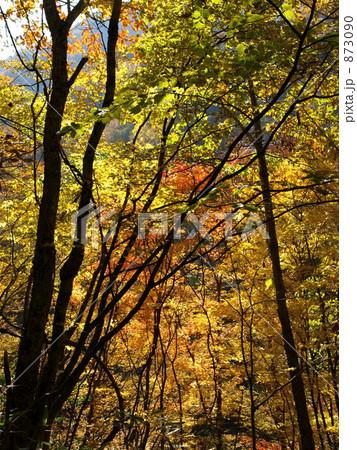 秋の色 873090