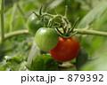 トマト 879392