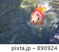 金魚Ⅱ 890924