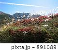 高山植物 チングルマ 果実 891089