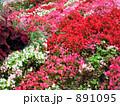ツツジ 庭園 891095