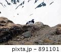 雷鳥 雪山 891101