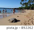 ノースショアの海ガメと海水浴客 892262