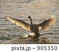 白鳥 905350