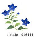 秋の七草 筆タッチ キキョウのイラスト 916444