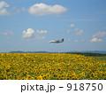 向日葵空港 918750