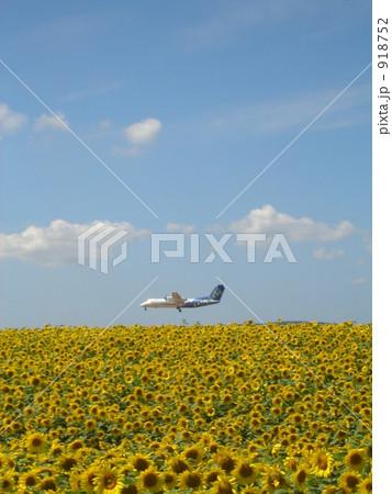 向日葵空港 918752