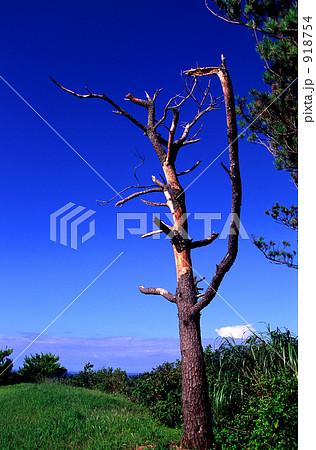 枯れ木と空 918754