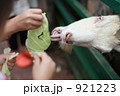 ヤギ やぎ エサやりの写真 921223