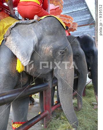 タイの象 939552