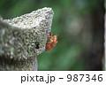 蝉の抜け殻 987346