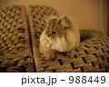 猫 988449