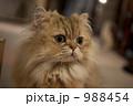 猫 988454