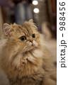 猫 988456