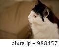 猫 988457