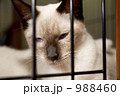 檻猫 988460