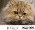 猫 988469