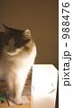 灯り猫 988476