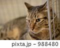 猫 988480