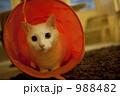 くぐる猫 988482