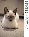 猫 988484
