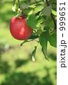 フジ りんご園 サンふじの写真 999651