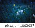 グラウンド脇のボールと花 1002027
