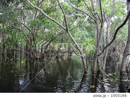 アマゾンの水没林 1003166