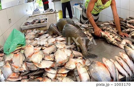 アマゾン川沿いの魚市場 1003170