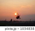 夕日に浮かぶ蜘蛛 1034838