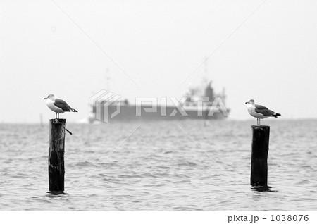 2羽のカモメ 1038076