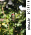クモの巣 1048743